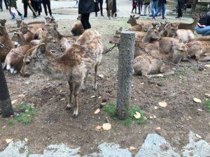 20190429-5奈良公園付近3