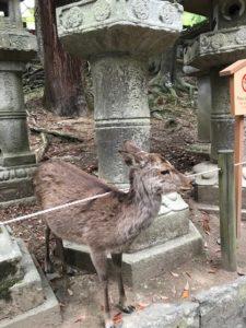 20190429-5奈良公園付近5