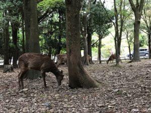 20190429-5奈良公園付近4
